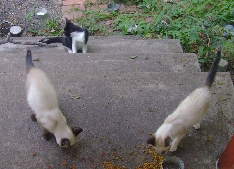 kittens-08112007-b
