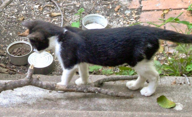 kittens-08112007-c