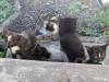 kittens-08112007