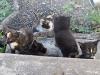 kittens-08112007_thumb