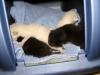 kittens_001